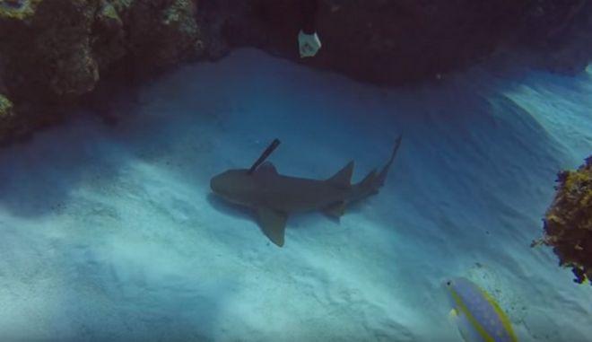 Βίντεο: Δύτης σώζει καρχαρία που είχε καρφωμένο ένα μαχαίρι