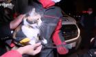 Σμύρνη: Γάτα διασώθηκε από σκύλο στα συντρίμμια του σεισμού
