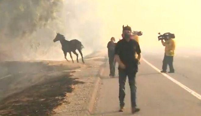 Άλογο επιστρέφει στις φλόγες για να σώσει την οικογένειά του