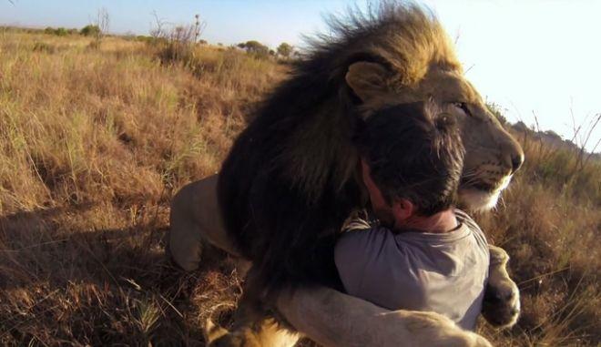 """Βίντεο: Ο άνθρωπος που """"μεταμορφώνει"""" τα λιοντάρια σε γάτες"""