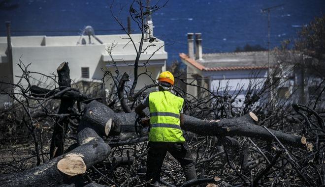 Υλοτόμος κόβει με αλυσοπρίονο καμένα δέντρα στο Μάτι Αττικής