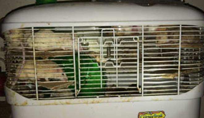 Πάνω από 1.000 ποντίκια, σκύλοι, γάτες και ψάρια βρέθηκαν κλεισμένα σε ένα σπίτι στον Καναδά