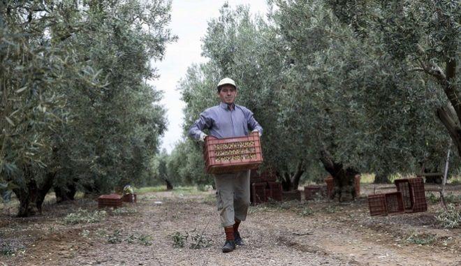 Αγρότης στο χωράφι του