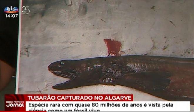 Πορτογαλία: Ψαράς αλίευσε 'προϊστορικό' καρχαρία