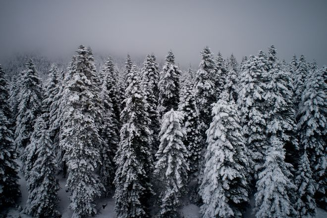 Χιονισμένο Περτούλι