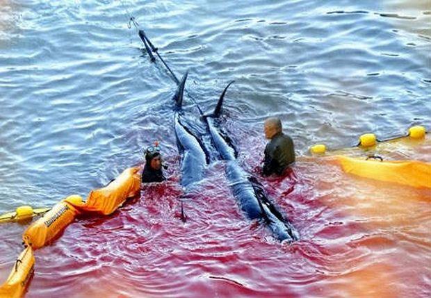 Παγκόσμια φρίκη για το ετήσιο κυνήγι δελφινιών στην Ιαπωνία