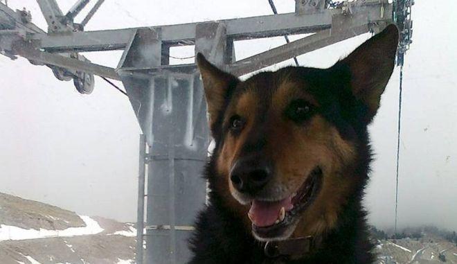 Συγκίνηση: Έφυγε ο Στέργιος, ο φύλακας άγγελος του χιονοδρομικού κέντρου Παρνασσού
