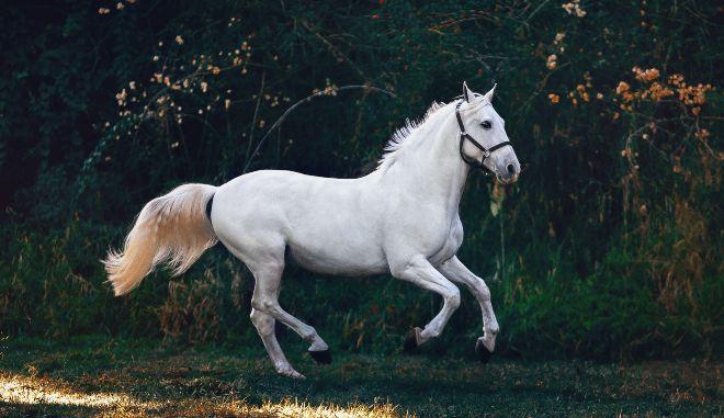 """Βρετανία: Παρουσιάστρια """"ανέστησε"""" το αγαπημένο της άλογο μέσω ταρίχευσης"""