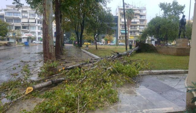 Δέντρα έπεσαν στο οδόστρωμα στις οδούς Αριστομένους και Βασιλέως Γεωργίου στην Καλαμάτα