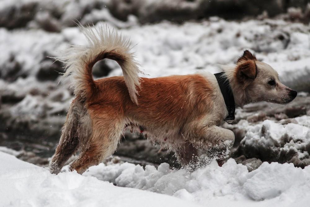 Τα χιονισμένα Τρίκαλα