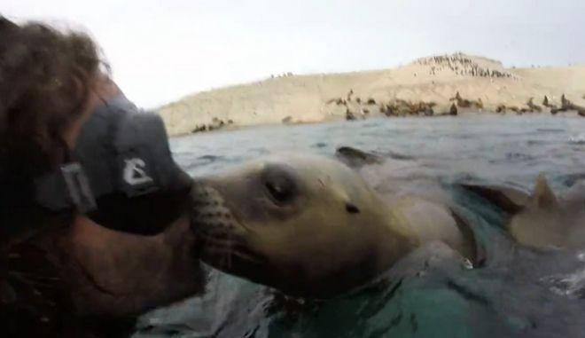 Τρυφερό στιγμιότυπο: Τα φιλιά του θαλάσσιου λιονταριού σε δύτη