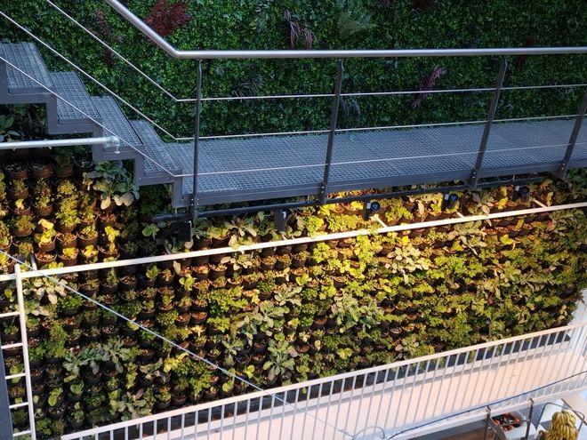 O κάθετος κήπος ο οποίος τροφοδοτεί με σαλάτες και μυρωδικά το τμήμα μαναβικής του Ergon