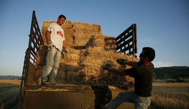 Θεσσαλικός κάμπος αγρότες