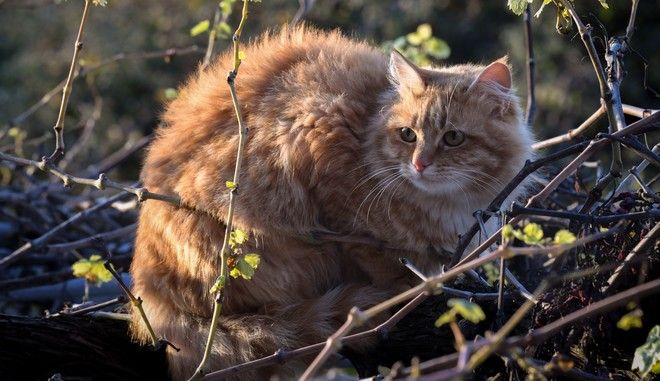 Μια αδέσποτη γάτα