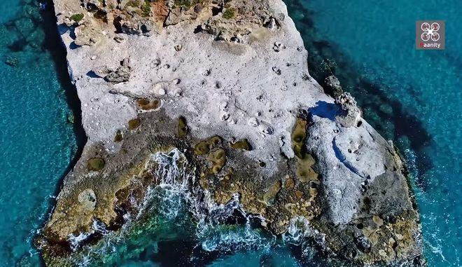 Το μοναδικό απολιθωμένο φοινικόδασος της Ευρώπης στην άκρη της Ελλάδας