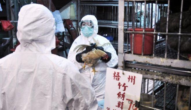 Στους δέκα νεκρούς από τη γρίπη των πτηνών