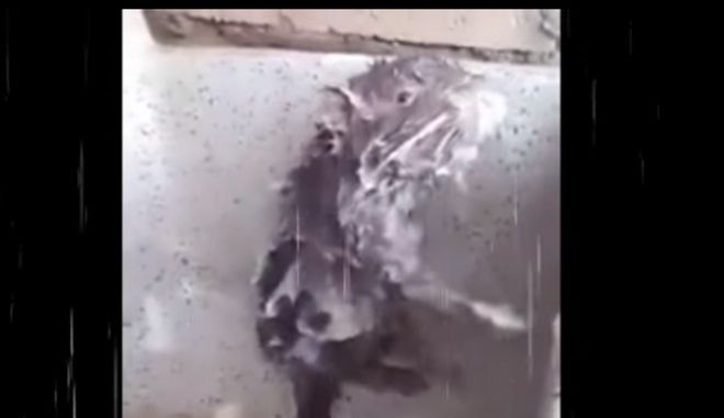 Ο viral 'αρουραίος που κάνει μπάνιο σαν άνθρωπος' ήταν τελικά... 'μαϊμού'