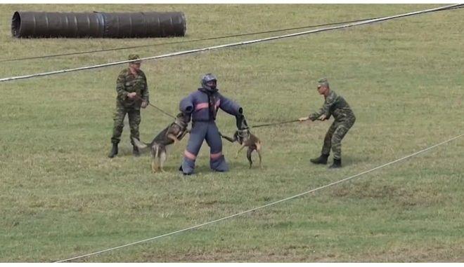 Στιγμιότυπο από την εκπαίδευση των σκύλων του στρατού