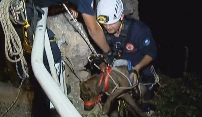 Εικόνες που κόβουν την ανάσα: Διάσωση σκύλου από γκρεμό 30 μέτρων