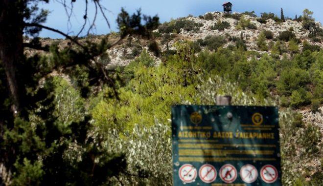 Σε απαγόρευση κυκλοφορίας στα δάση από την δύση μέχρι την ανατολή του ηλίου αλλά και σε ενίσχυση της αστυνόμευσης,αποφασίστηκε από το Υπουργείο Προστασίας του Πολίτη,έως το Σάββατο,καθώς υπάρχει πολύ υψηλός κίνδυνος πυρκαγιάς λόγω των ισχυρών ανέμων.Στιγμιότυπο από τα μέτρα σε μια από τις εισόδους του Υμηττού,στο αισθητικό δάσος της Καισαριανής,Τετάρτη 7 Αυγούστου 2013 (EUROKINISSI/ΤΑΤΙΑΝΑ ΜΠΟΛΑΡΗ)