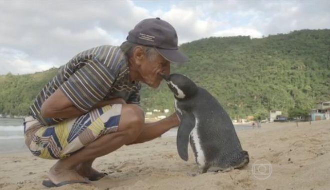 Πιγκουίνος διανύει 8.000 χλμ για να δει τον άνθρωπο που τον έσωσε