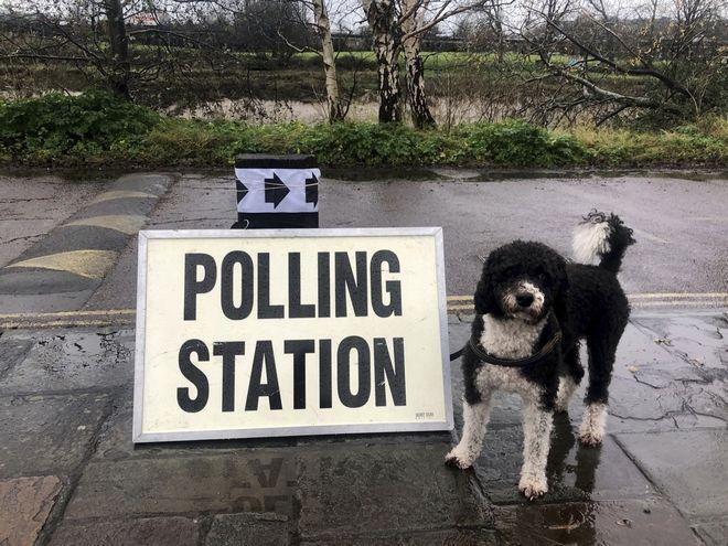 Σκύλος περιμένει έξω από εκλογικό κέντρο.