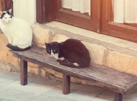 ae1602e16c20 Γιατί εξαφανίστηκαν οι γάτες στη Θεσσαλονίκη - Κοινωνία