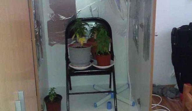 Καλλιεργούσε κάνναβη μέσα στη ντουλάπα του σπιτιού του...
