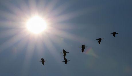 Ηλιοφάνεια στο Δέλτα του Πηνειού ποταμού στα παράλια του νομού Λάρισας