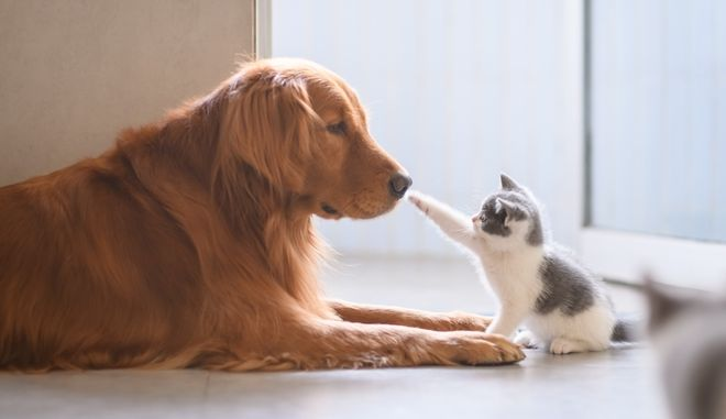 Η μάχη των κατοικίδιων: Πόσοι έχουν σκύλο και πόσοι γάτα στην Ελλάδα