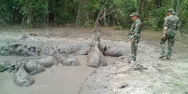 Δασοφύλακες διέσωσαν έξι ελεφαντάκια που είχαν εγκλωβιστεί σε έναν βαθύ λάκκο με λάσπη