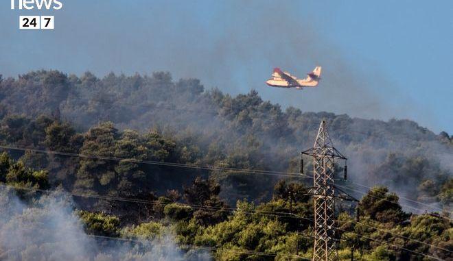 Στάχτη και αποκαΐδια ο Κάλαμος: Η εικόνα μετά τη φωτιά kalamos13c