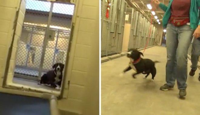 Βίντεο: Η συγκινητική αντίδραση ενός σκύλου που υιοθετείται, γλιτώνοντας την ευθανασία