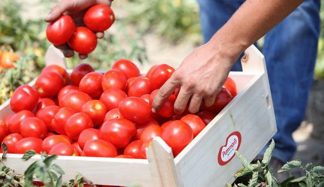 Unilever: Όλα ανοιχτά για το εργοστάσιο της Pummaro στην Ελλάδα