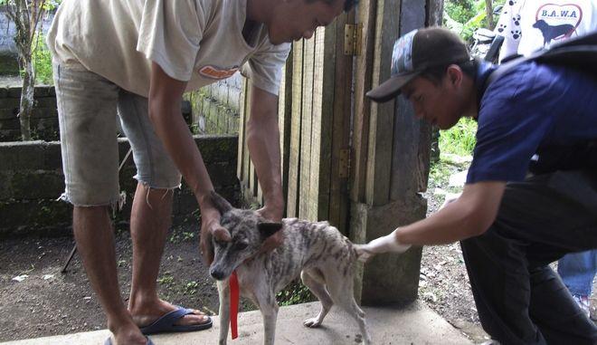 Εμβολιασμός σκύλου στην Ινδονησία
