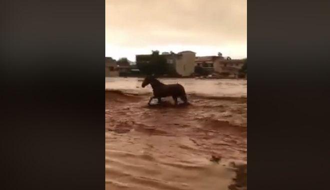 Βίντεο: Άλογο παλεύει με χείμαρρο στη Μάνδρα και βγαίνει ζωντανό
