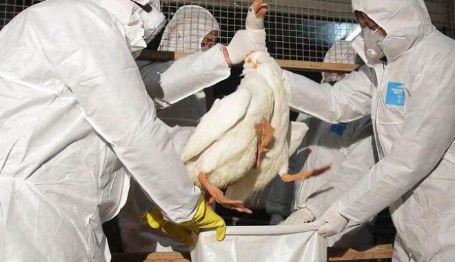 Νέο κρούσμα της γρίπης των πτηνών σε πάπιες στη Νότια Κορέα