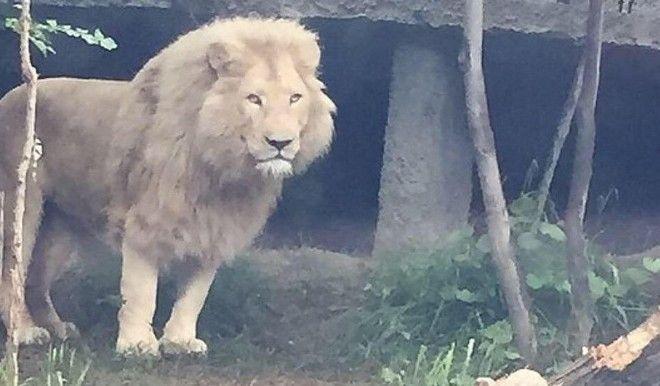 Χάος στην Τιφλίδα: Άγρια ζώα ξεχύθηκαν στους δρόμους της πόλης