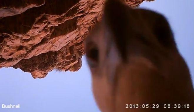 Αετός άρπαξε κάμερα και την πήρε μαζί του για 100 χιλιόμετρα