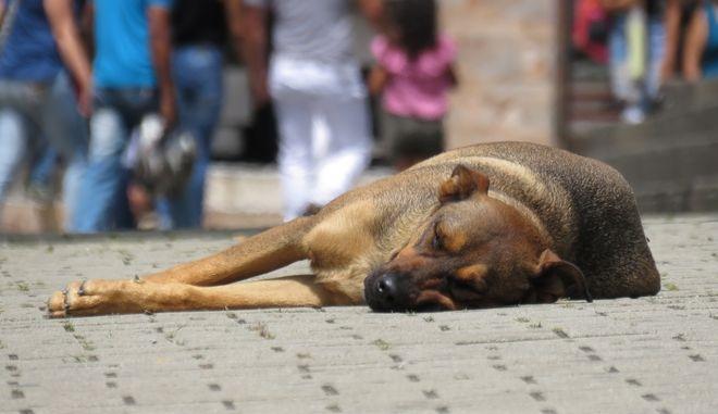 Δήμαρχος κατηγορείται ότι έριχνε φόλες σε σκυλιά