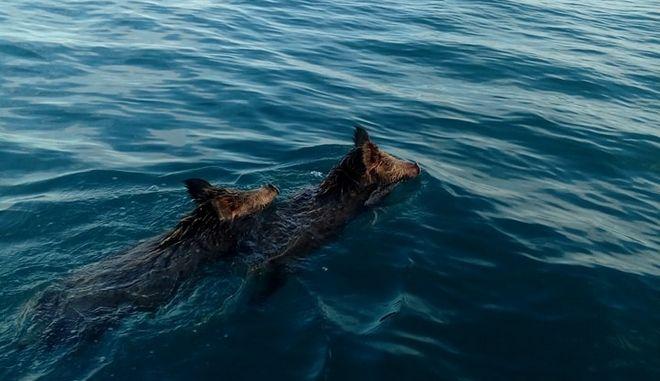 Ηλεία : Ψάρευαν συναγρίδες στο Ιόνιο και συνάντησαν μεσοπέλαγα αγριογούρουνα