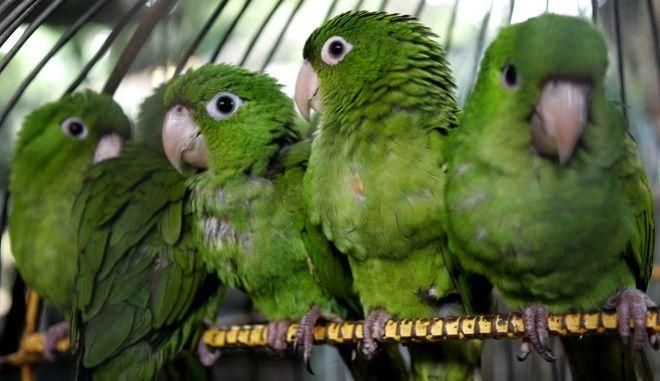 Ανακάλυψαν σπάνιο πουλί στην Κίνα