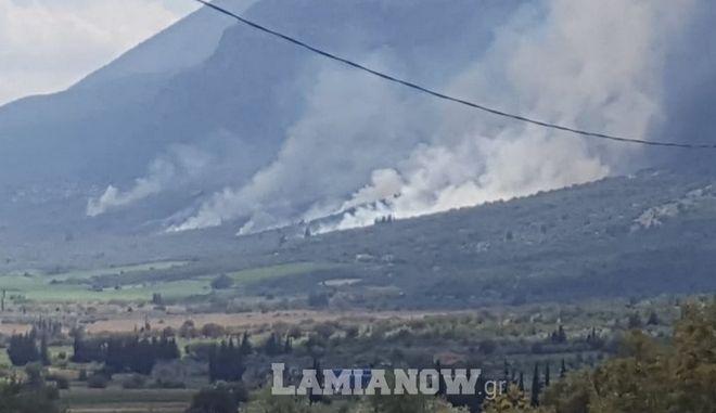 Φωτιά σε αγροτοδασική έκταση στην Τιθορέα