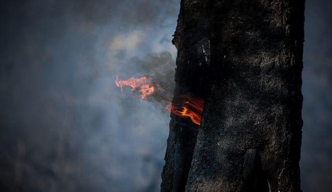 Φωτιά (ΦΩΤΟ Αρχείου)