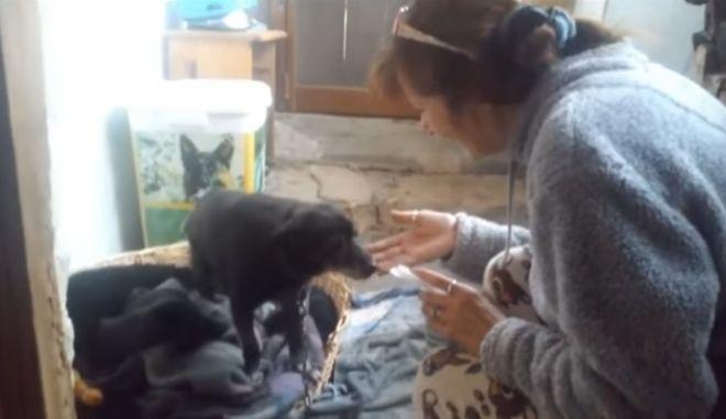 97χρονη δεν πήγαινε στο γηροκομείο για να μην εγκαταλείψει το γέρικο σκυλάκι της