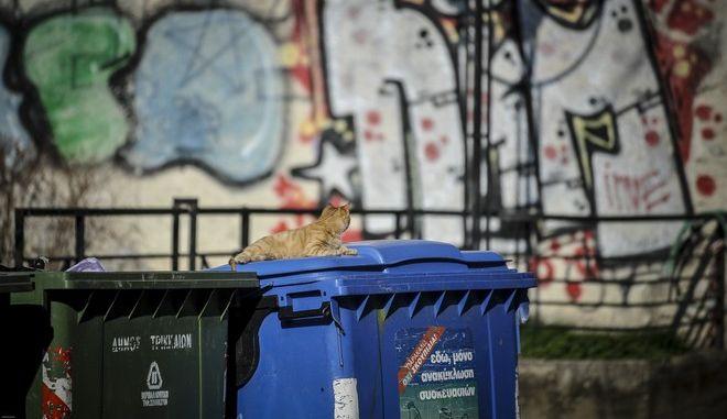 Αδέσποτη γάτα είναι ξαπλωμένη πάνω στο καπάκι κάδου ανακύκλωσης στην πόλη των Τρικάλων