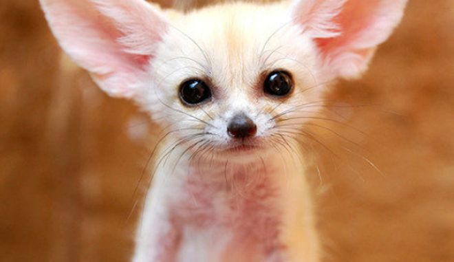 diaforetiko.gr : smallest animals15 Εκπληκτικές Φωτογραφίες: Ζώα μινιατούρες. Και όμως υπάρχουν!