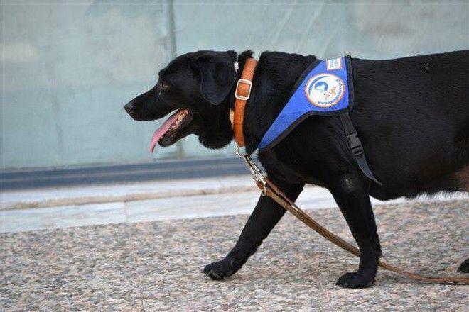 Πέθανε η Λάρα, ο πρώτος σκύλος οδηγός τυφλών στην Ελλάδα