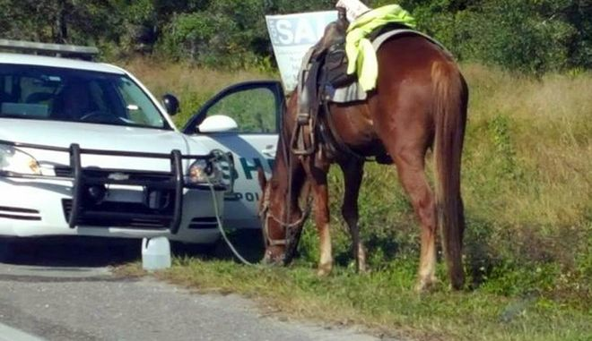 This photo made available by Diane Dodge shows a horse tied to a Polk County Sheriff Office cruiser on Nov.2, 2017, in Lakeland, Fla. Donna Byrne, 53, was charged with riding the horse down a busy Florida highway while intoxicated. She is also charged with animal neglect. (Diane Dodge via AP)