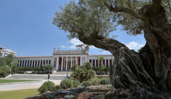 Ο αισθητικά αναβαθμισμένος εξωτερικός κήπος του Εθνικού Αρχαιολογικού Μουσείου αποδόθηκε τη Δευτέρα στους Αθηναίους και στους επισκέπτες του Μουσείου.